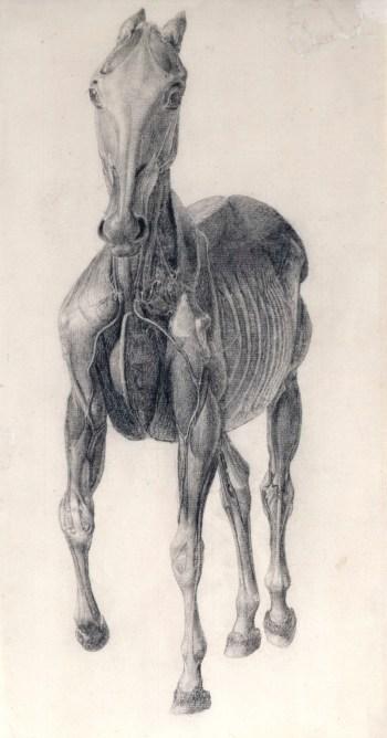 George Stubbs Artist Royal Academy Of Arts