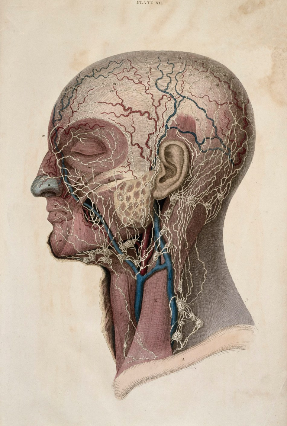 The Ra Collection In 250 Objects Anatomy Blog Royal Academy Of Arts
