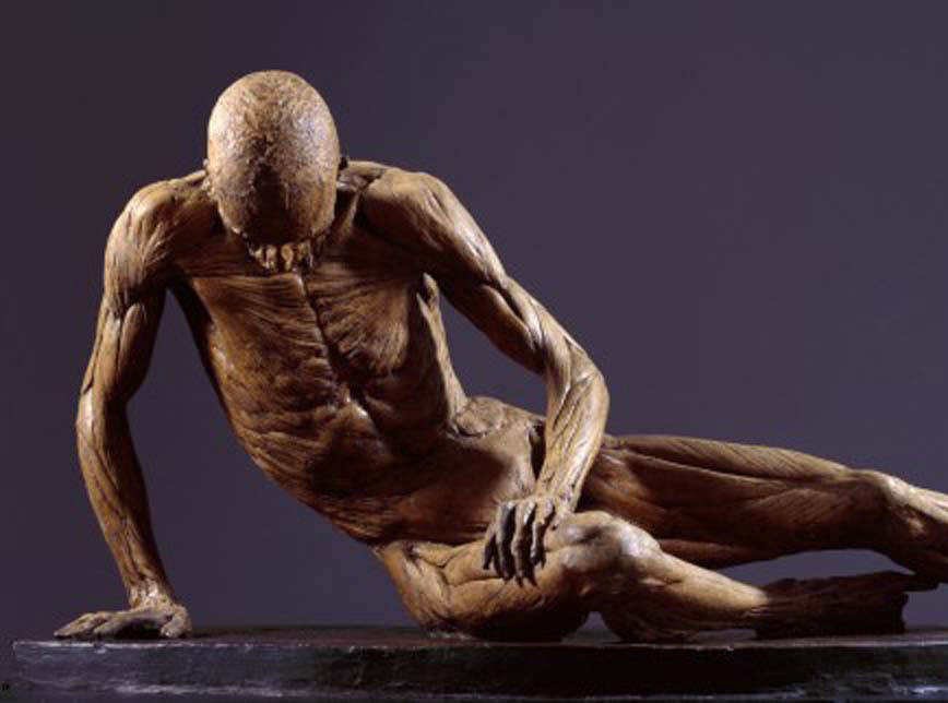 The Anatomy Professor Exhibition Royal Academy Of Arts