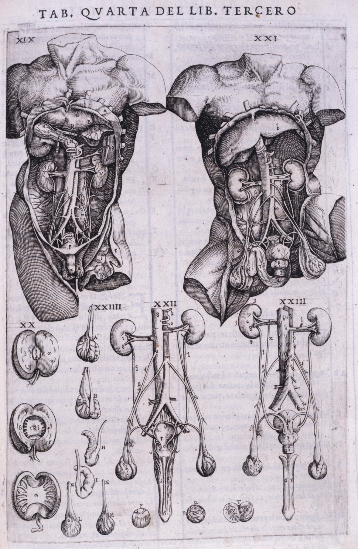 Internal Organs Of Human Body Works Of Art Ra Collection Royal