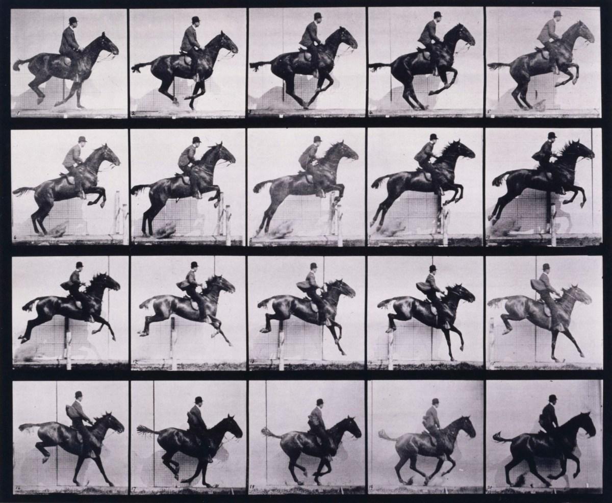 Jumping A Hurdle Saddle Bay Horse Daisy Works Of Art Ra Collection Royal Academy Of Arts