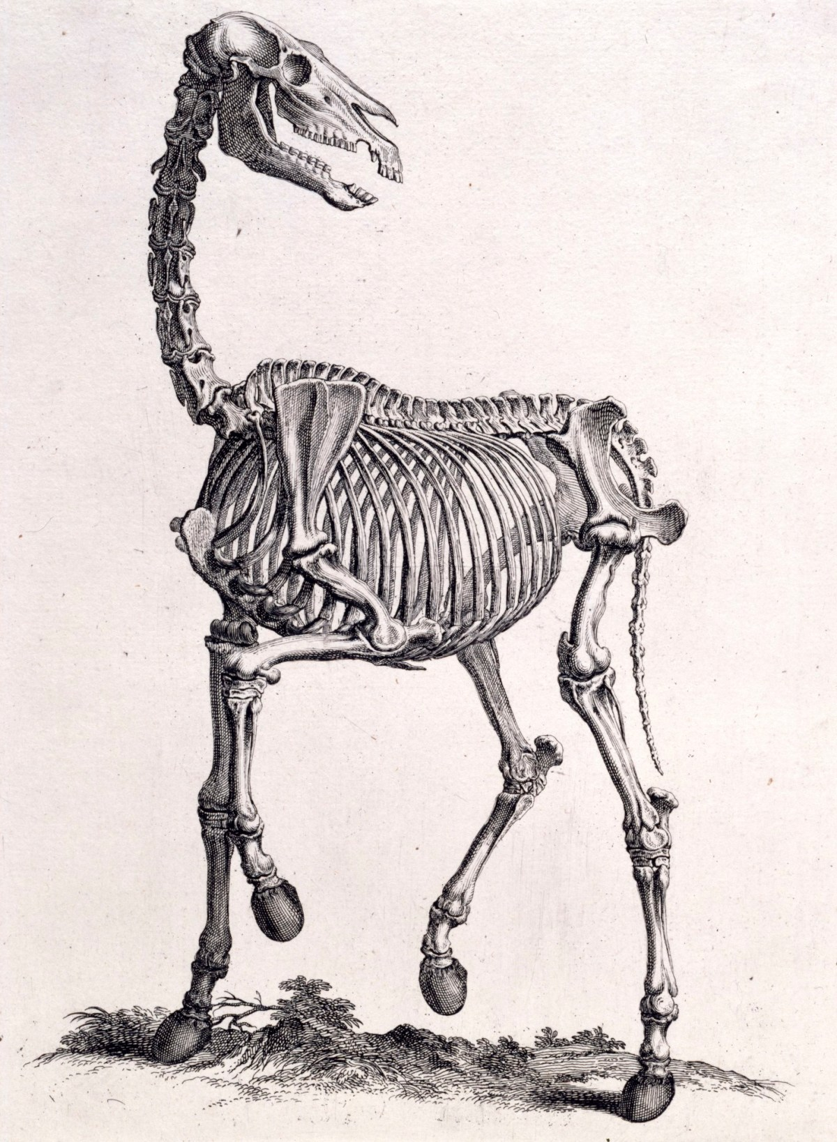 The Skeleton Of The Horse Works Of Art Ra Collection Royal Academy Of Arts