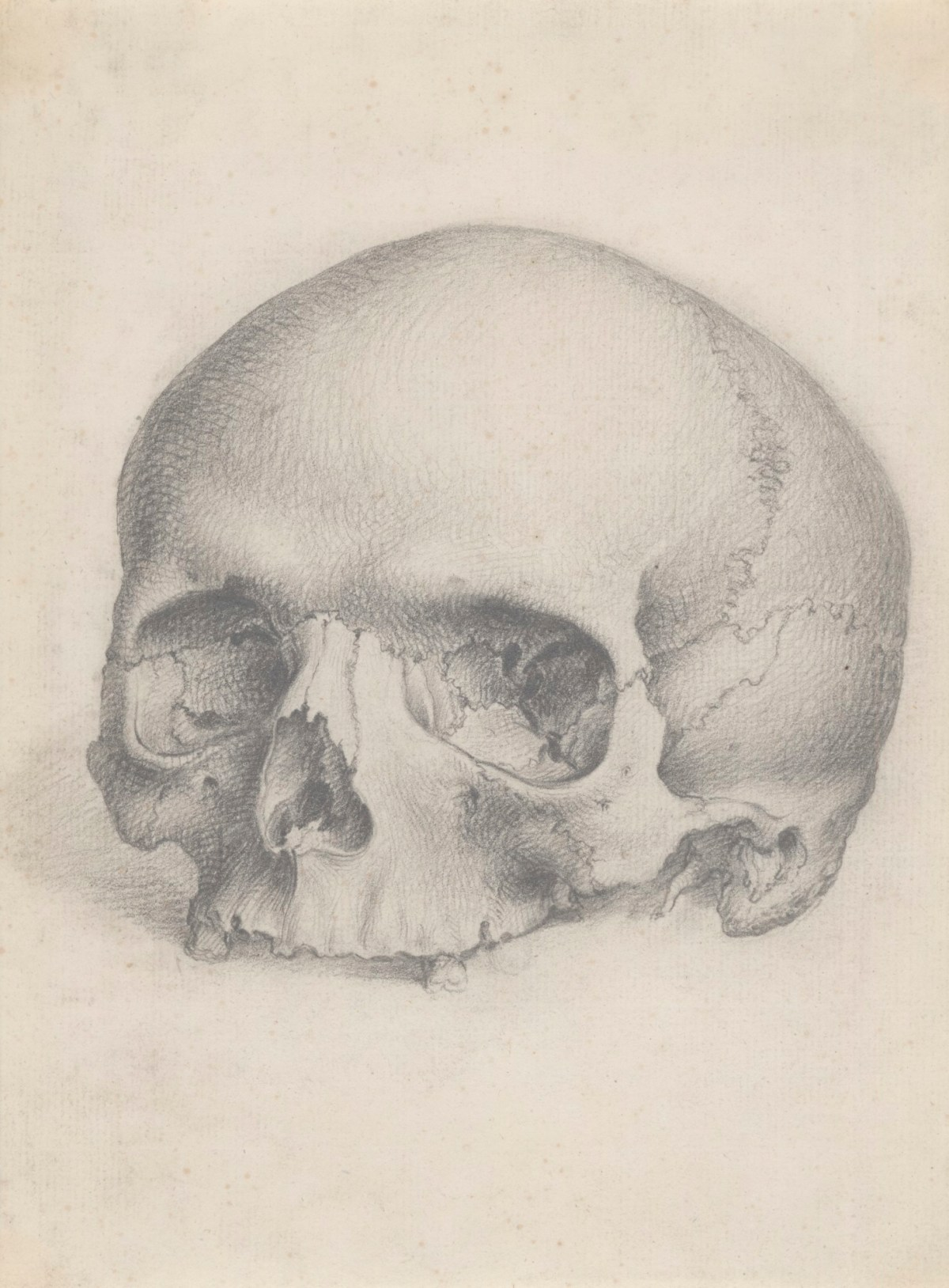 A Human Skull Viewed From The Front For Cheselden S Osteographia Works Of Art Ra Collection Royal Academy Of Arts