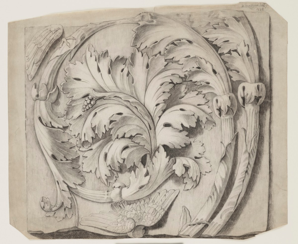 drawing of carved acanthus leaf ornament works of art ra collection royal academy of arts drawing of carved acanthus leaf ornament works of art ra collection royal academy of arts