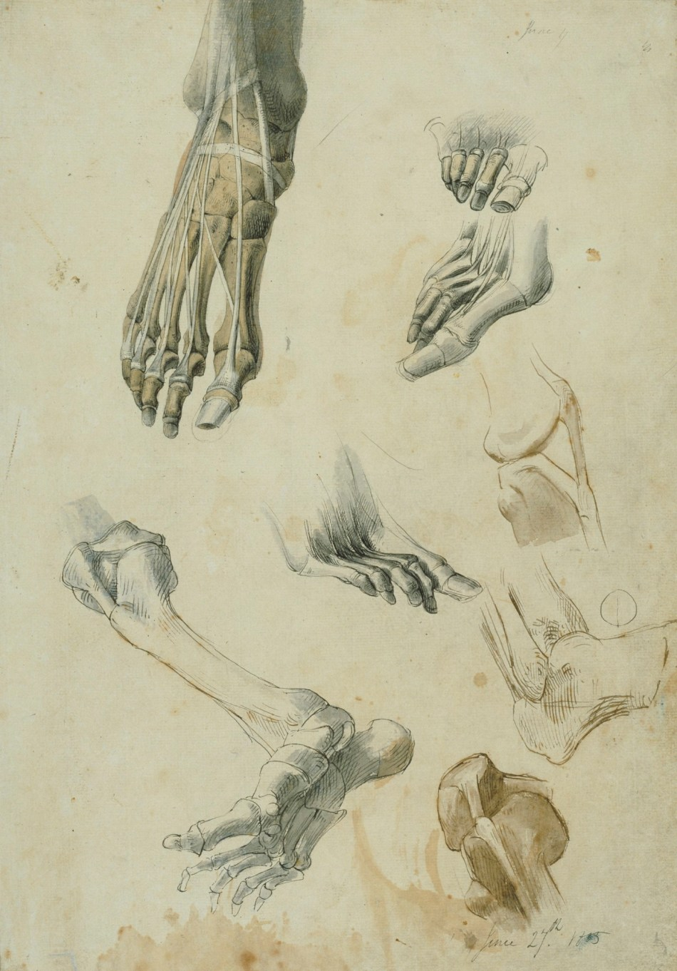 The RA Collection in 250 objects: Anatomy | Blog | Royal Academy of Arts
