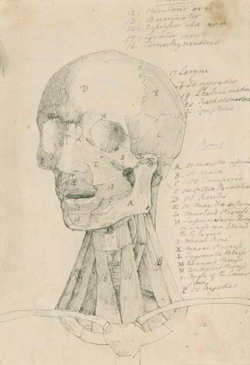 Head Bones Anatomy Neck Picturesque Back Picturesboss
