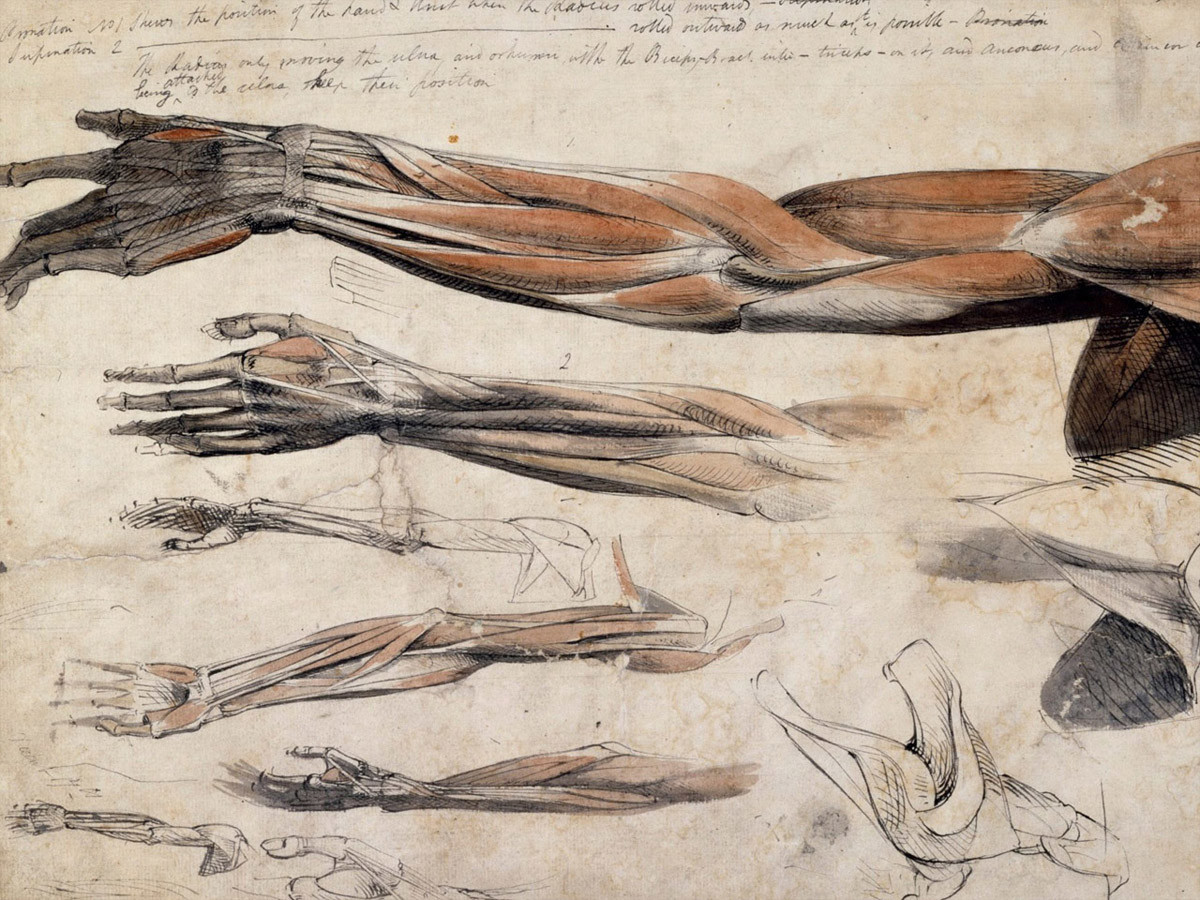 Anatomical drawing | Event | Royal Academy of Arts